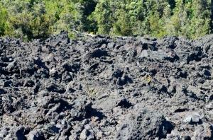 Stark landscape from where lava destroyed vegetation