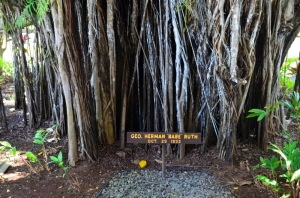 Banyan tree planted by Babe Ruth in 1935