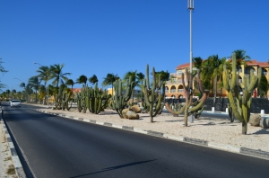 Cacti growing down the middle of the street near the beach