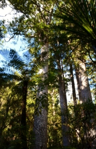 sea princess (bay of Ils) NZ 023 (530x800)