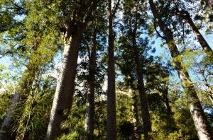 sea princess (bay of Ils) NZ 043 (800x530)