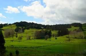 sea princess (bay of Ils) NZ 063 (800x530)