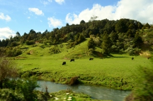 sea princess (bay of Ils) NZ 083 (800x530)