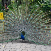 Currumbin Bird Sanctuary (120) (800x529)