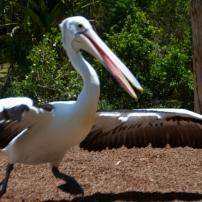 Currumbin Bird Sanctuary (32) (800x530)
