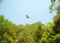 Currumbin Bird Sanctuary (42) (800x580)