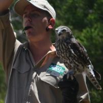 Currumbin Bird Sanctuary (46) (800x530)