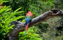 Currumbin Bird Sanctuary (70) (800x511)