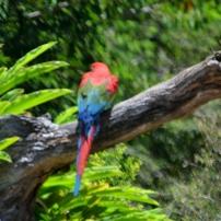 Currumbin Bird Sanctuary (70) (800x511)