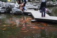 Shanghai Yu Gardens (5)