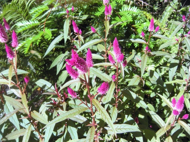 Open Garden Viola's Patch (5)