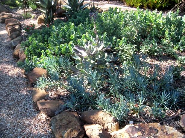Open Garden Viola's Patch (7)