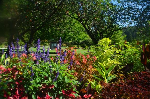 Butchart Gardens (3)