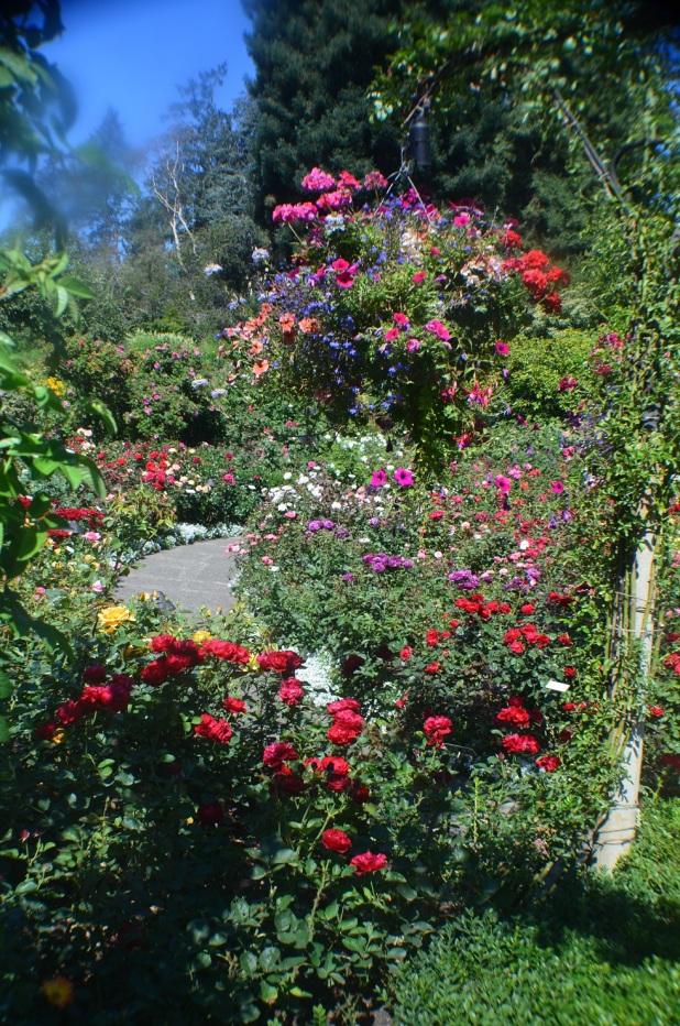 Butchart Gardens (6)