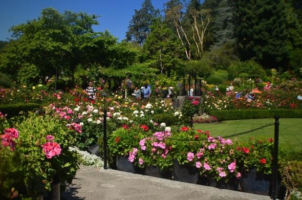 Butchart Gardens (7)